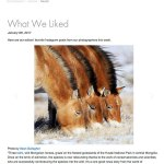 """National Geographic """"What We Liked"""""""