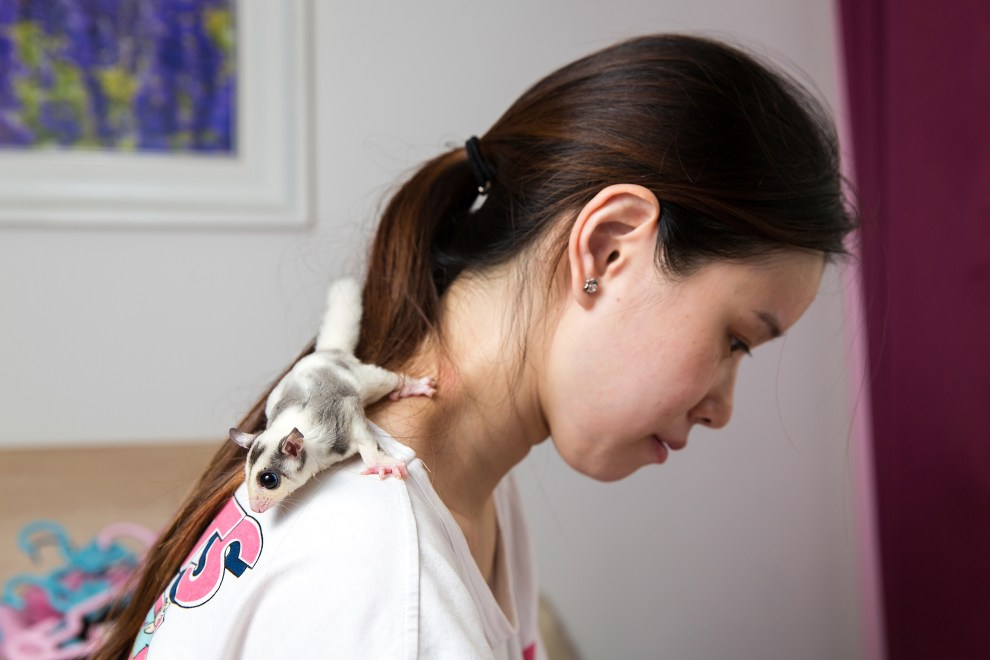Mao Yueying, 27, with her pet 'Sugar Gilder' at home in Beijing. The nocturnal gliding possum (Petaurus breviceps) is typically found in the forests of Australia, Indonesia and New Guinea but has become a very popular pet in China due to its small size and unique appearance. Ms. Mao keeps three Sugar Gliders at home with the most expensive white individual costing 4000RMB (US$600 approx.).