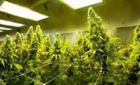 Medical marijuana laws in Minnesota