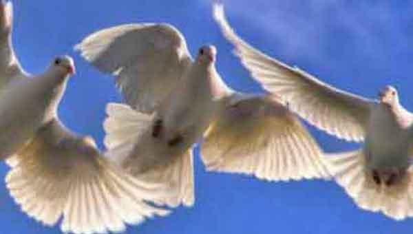 Liberty birds freedom