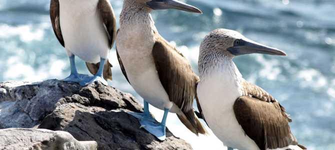 The enchanting Galapagos Islands