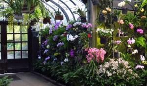 Orchids_3