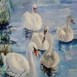 fem svaner på søen