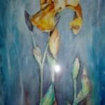 iris med gullig blomst
