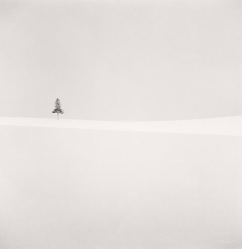 Michael kenna, Delicate Tree, Furano, Hokkaido, Japan. 2012