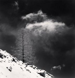 Frosty Mountain Tree, Pian del Re, Crissolo, Cuneo, Italy. 2019