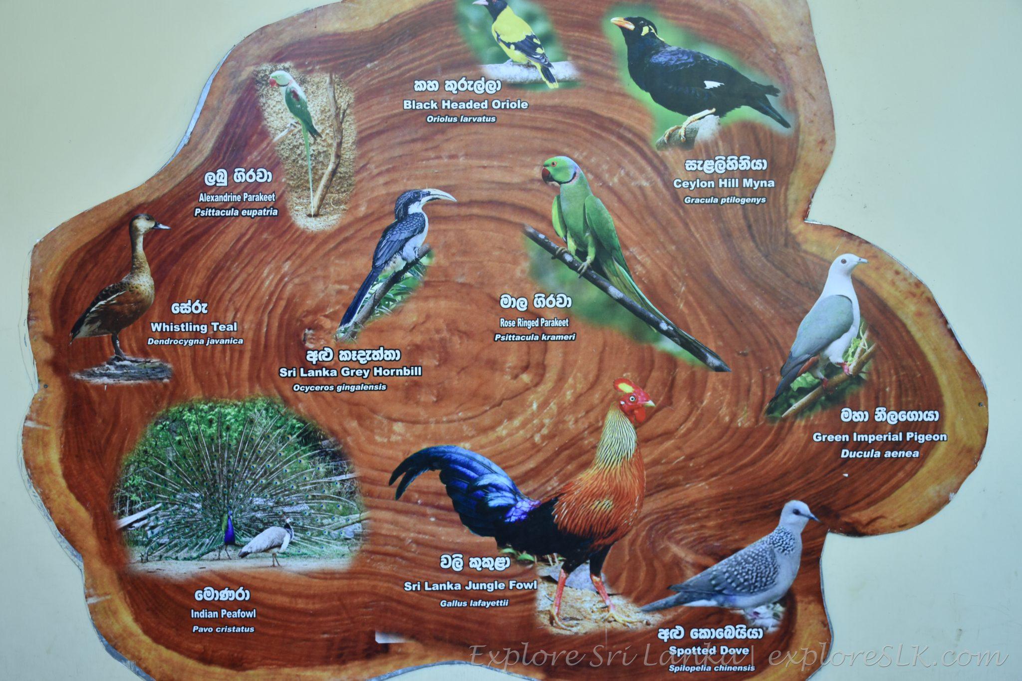List of birds at Dehiwala zoo
