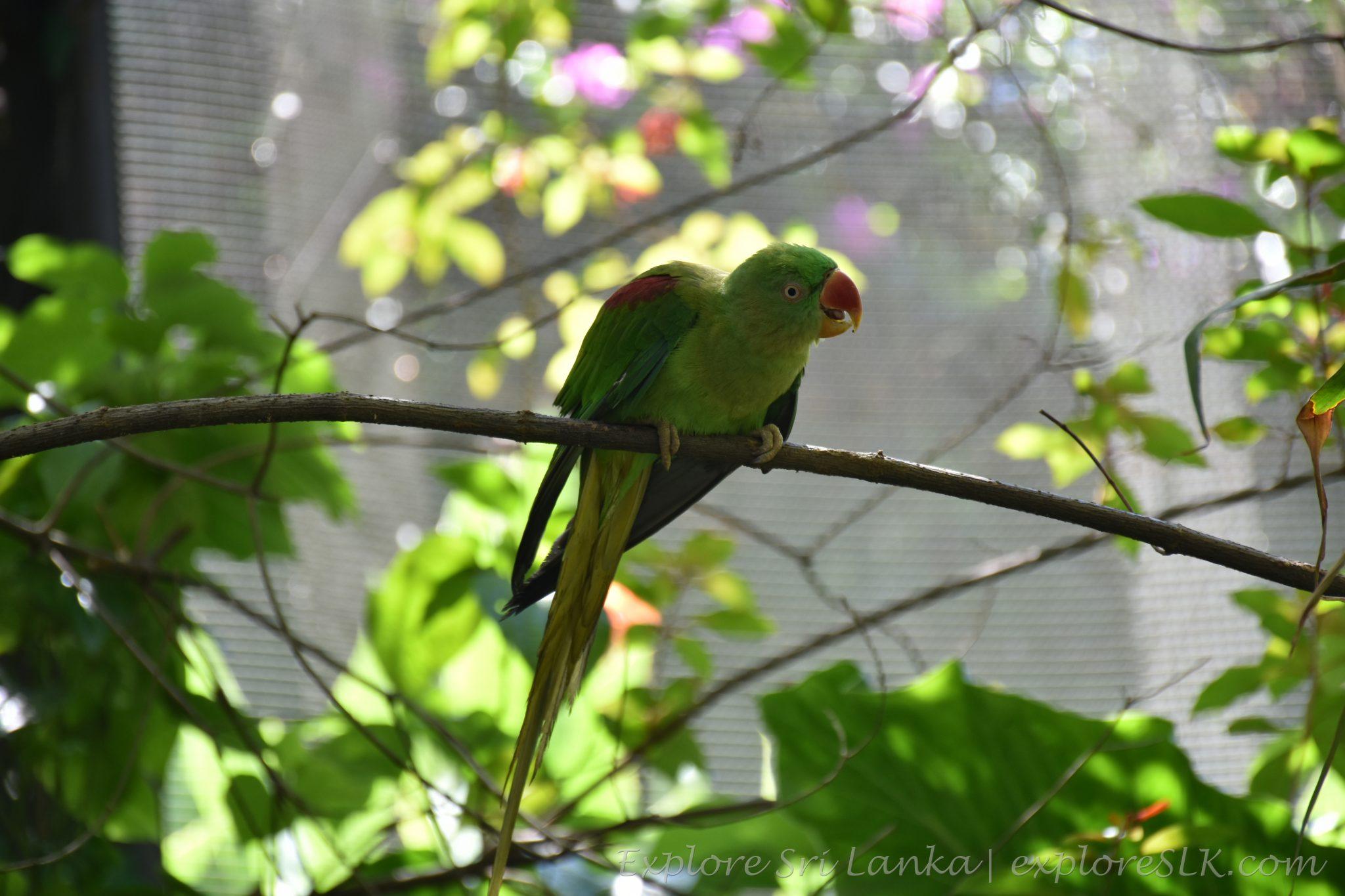 Shouting parrot