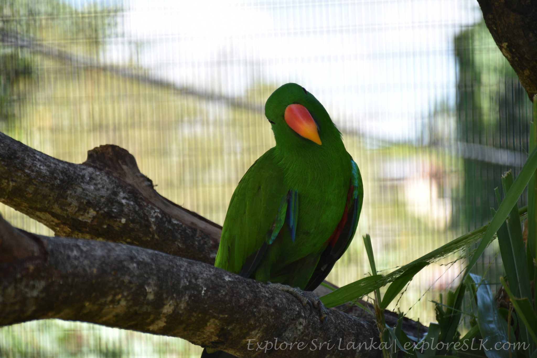 possing parrot