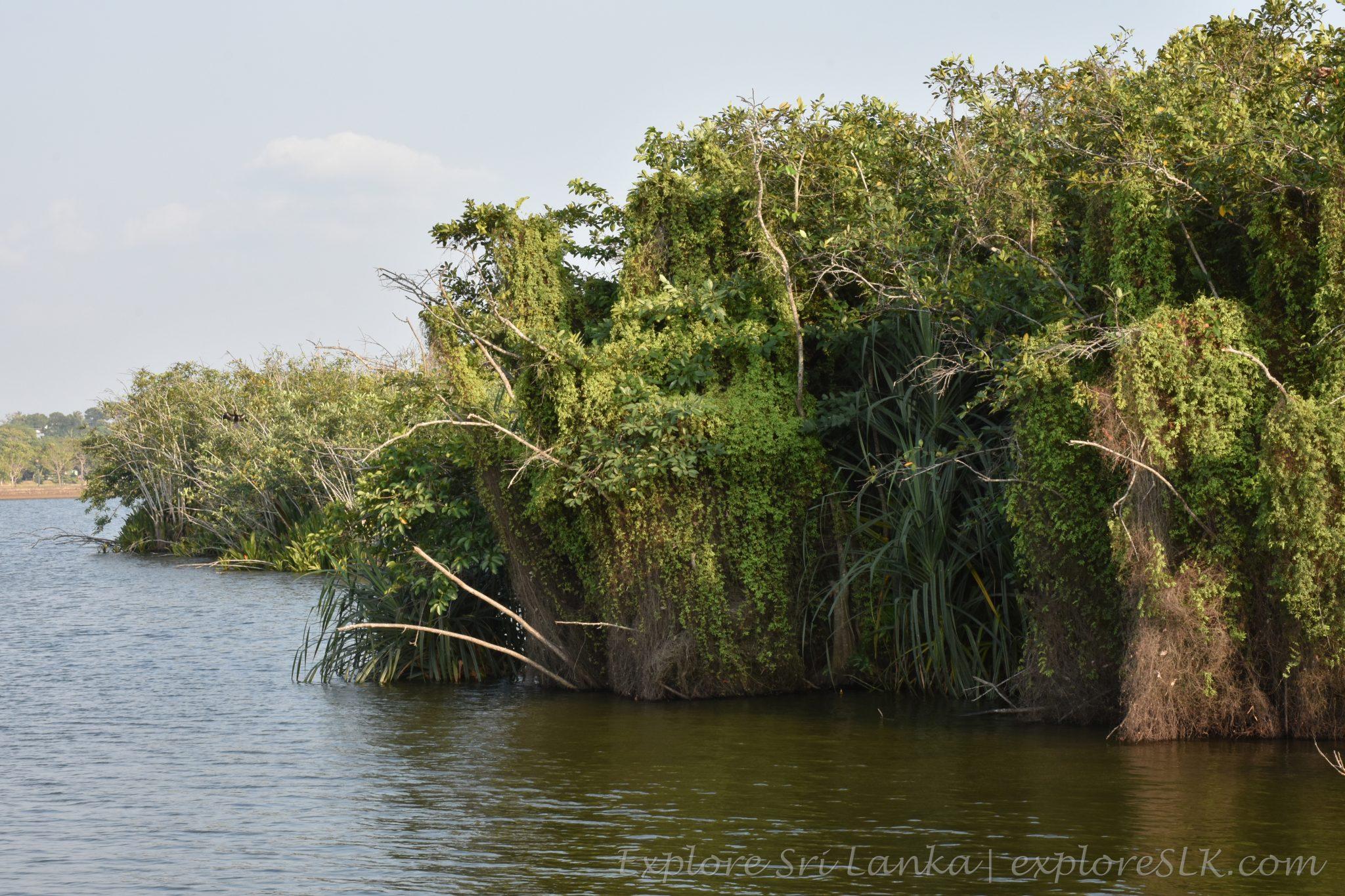 Diyawanna Lake