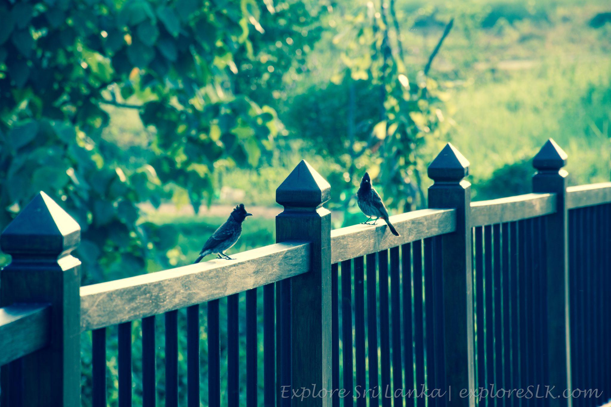 birds on the fence