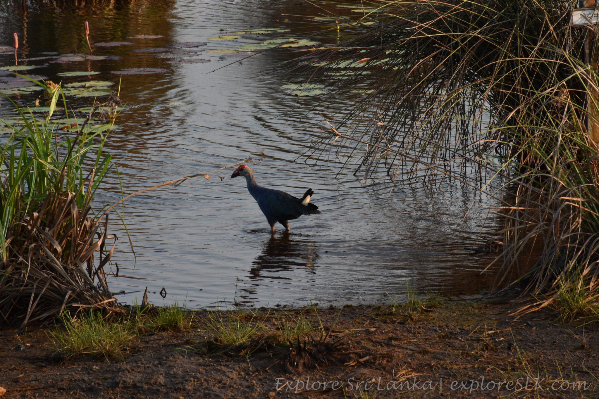 Migratory birds trail