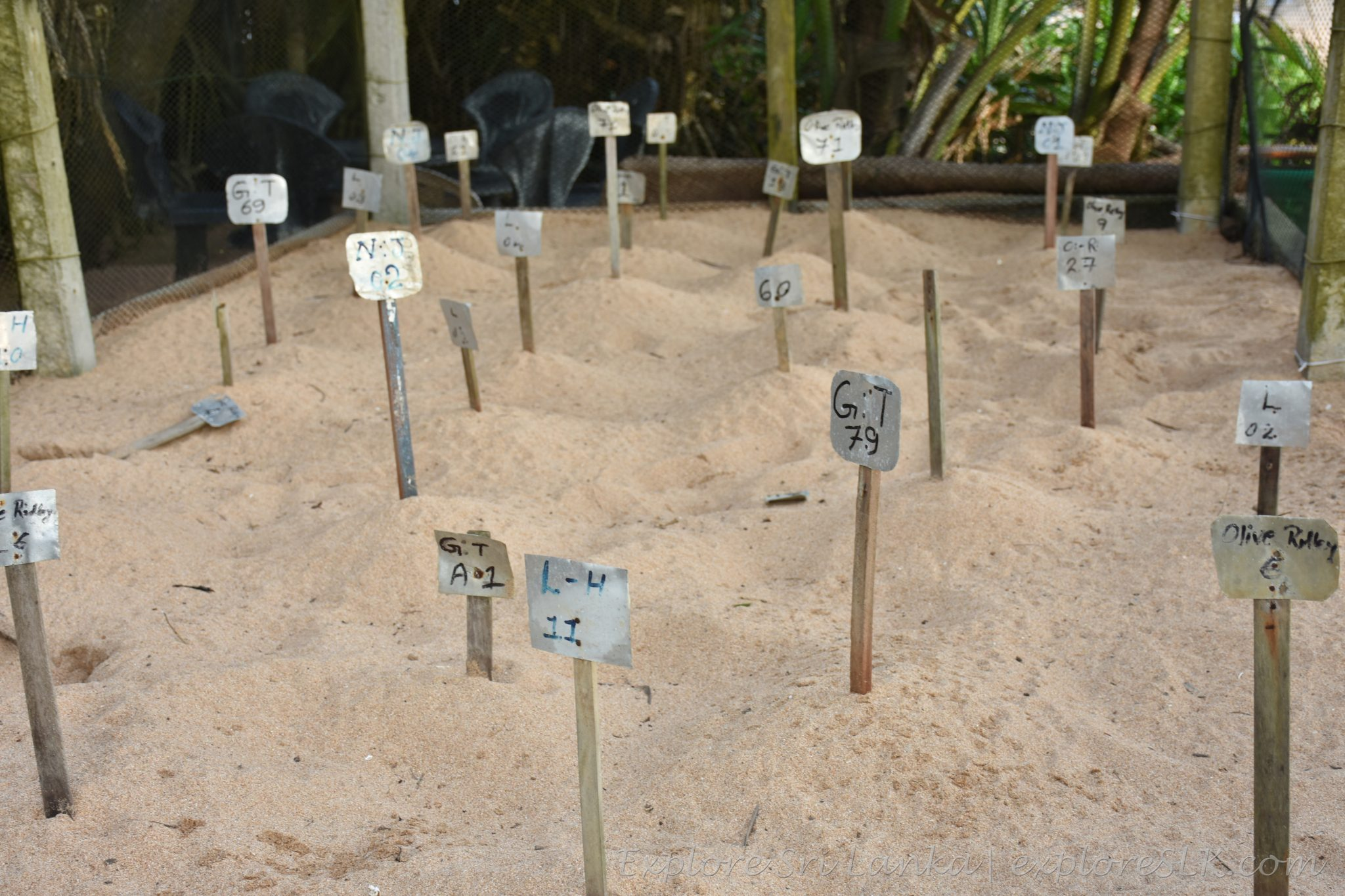 sea turtle nests