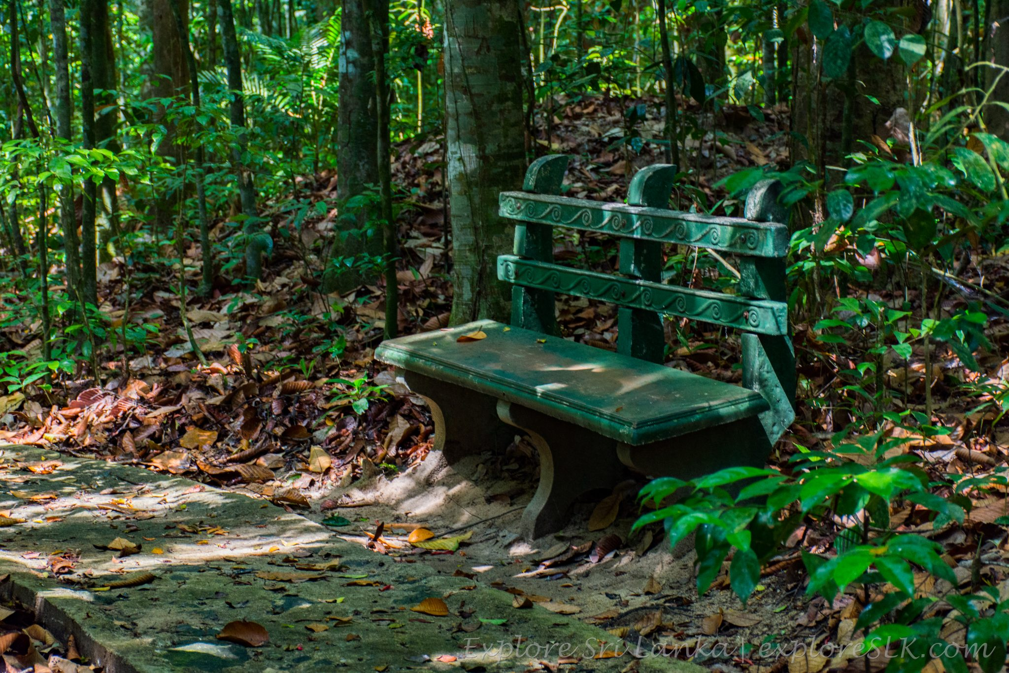 Bench in Jungle
