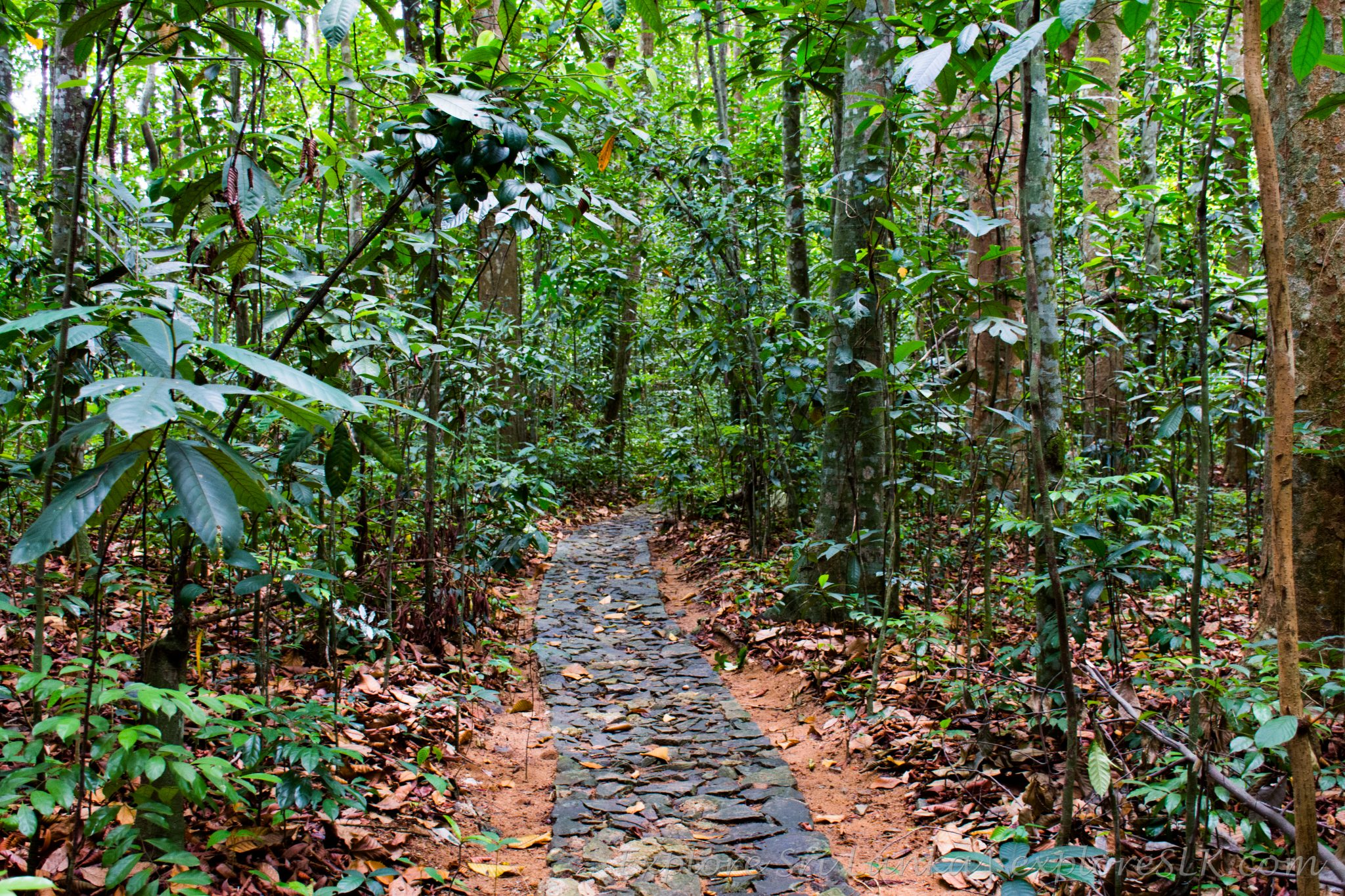 Footpath in Jungle
