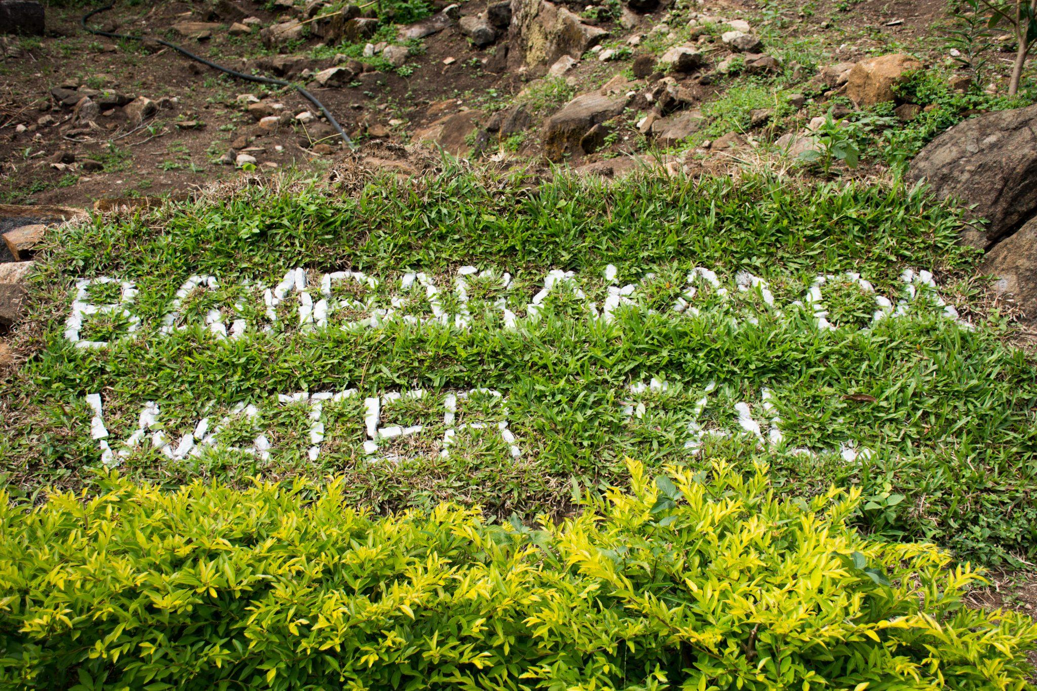 Sign on Grass