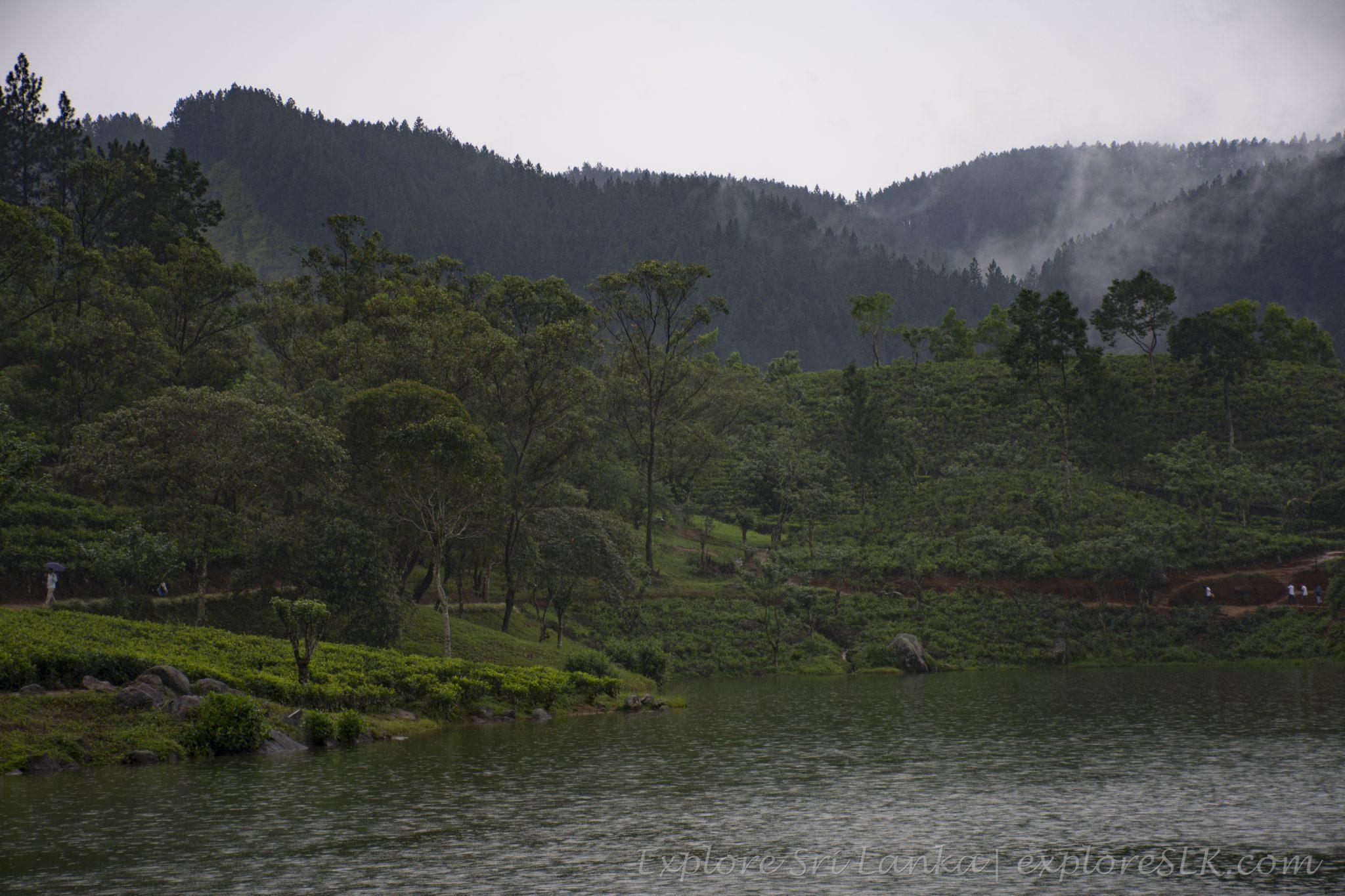 Tea plantations at lake