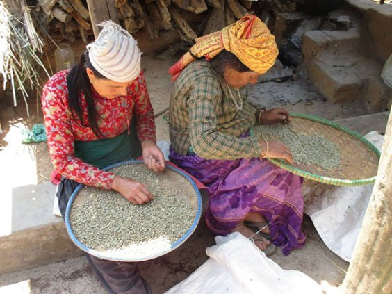 Coffee in Nepal