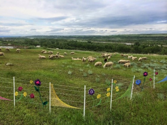 Yarn-bombed electric fence