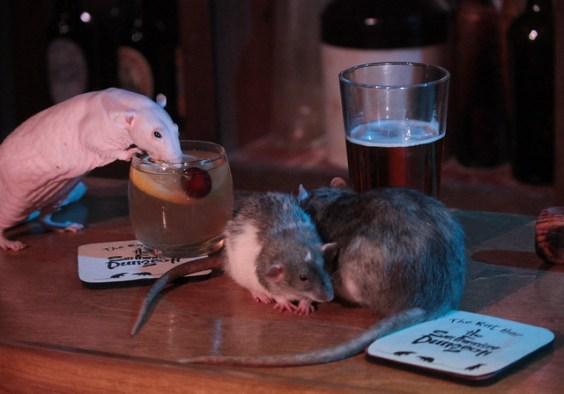 Rat Pop-Up Bar in San Francisco