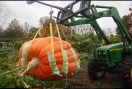 Look at that Pumpkin!
