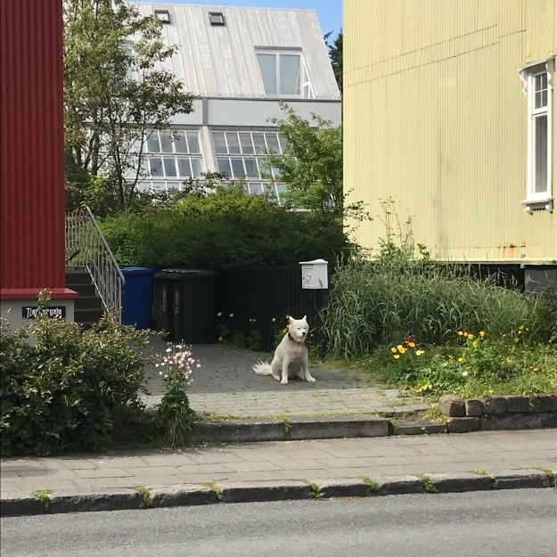 Skip from In the Doghouse Spotted in Iceland
