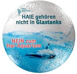 Haie gehören ins Meer
