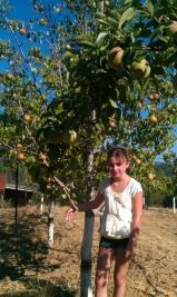 Boggs' Market Garden Fruit Trees