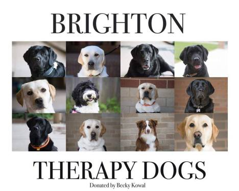 Brighton Area Schools therapy dogs