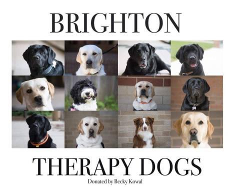 Brighton Area Schools therapy dogs