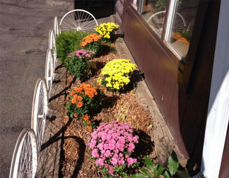 Hometown Bicycles Whitmore Lake Fall Mums
