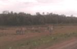 Zebra along the road
