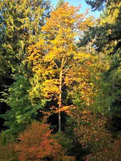 backyard autumn trees
