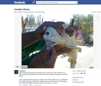 Facebook story about a one-eyed, albino baby shark