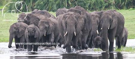Conservation Action Trust