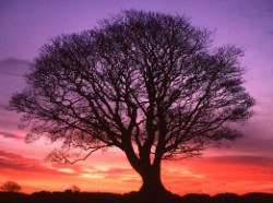 Meditation on a Tree - mp3