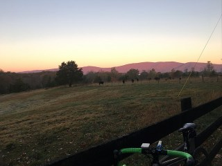 Morning light along Dick Woods Road