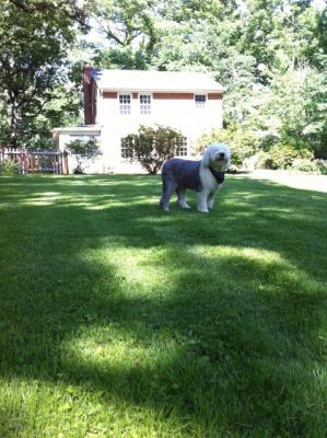 Awesome dog in backyard