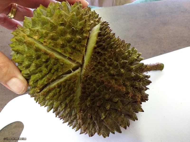 Musang King frozen without a star?