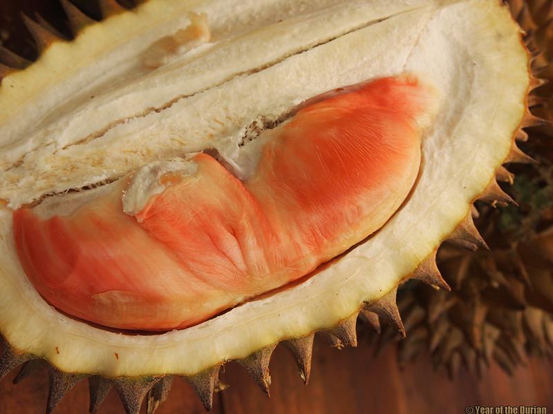 Durian Pelangi Banyuwangi Java