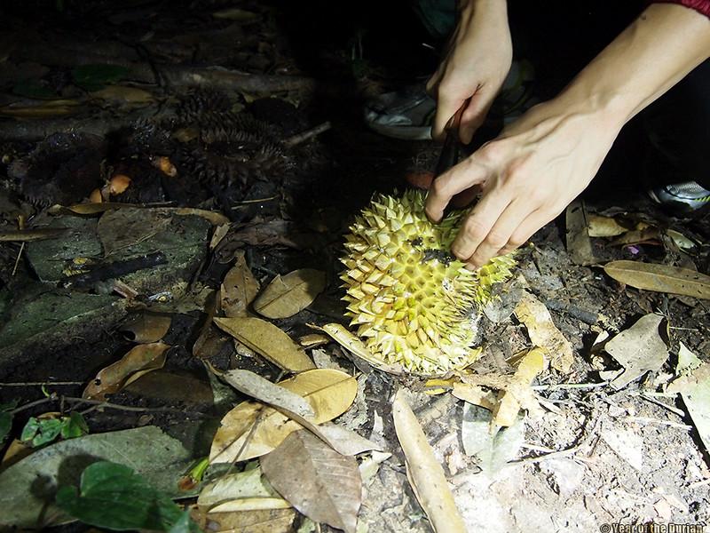 singapore wild durian