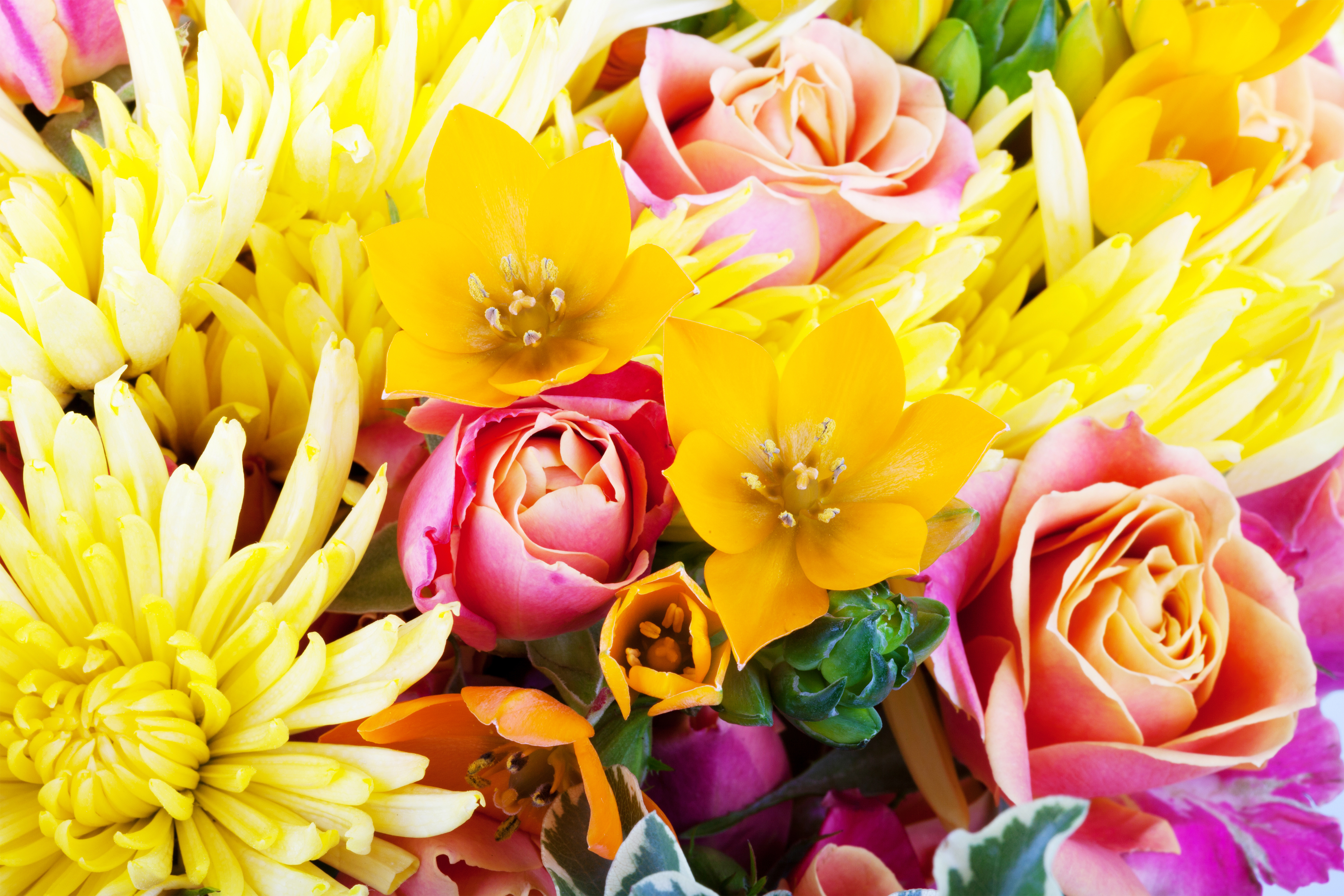 Beautiful Floral Background - High