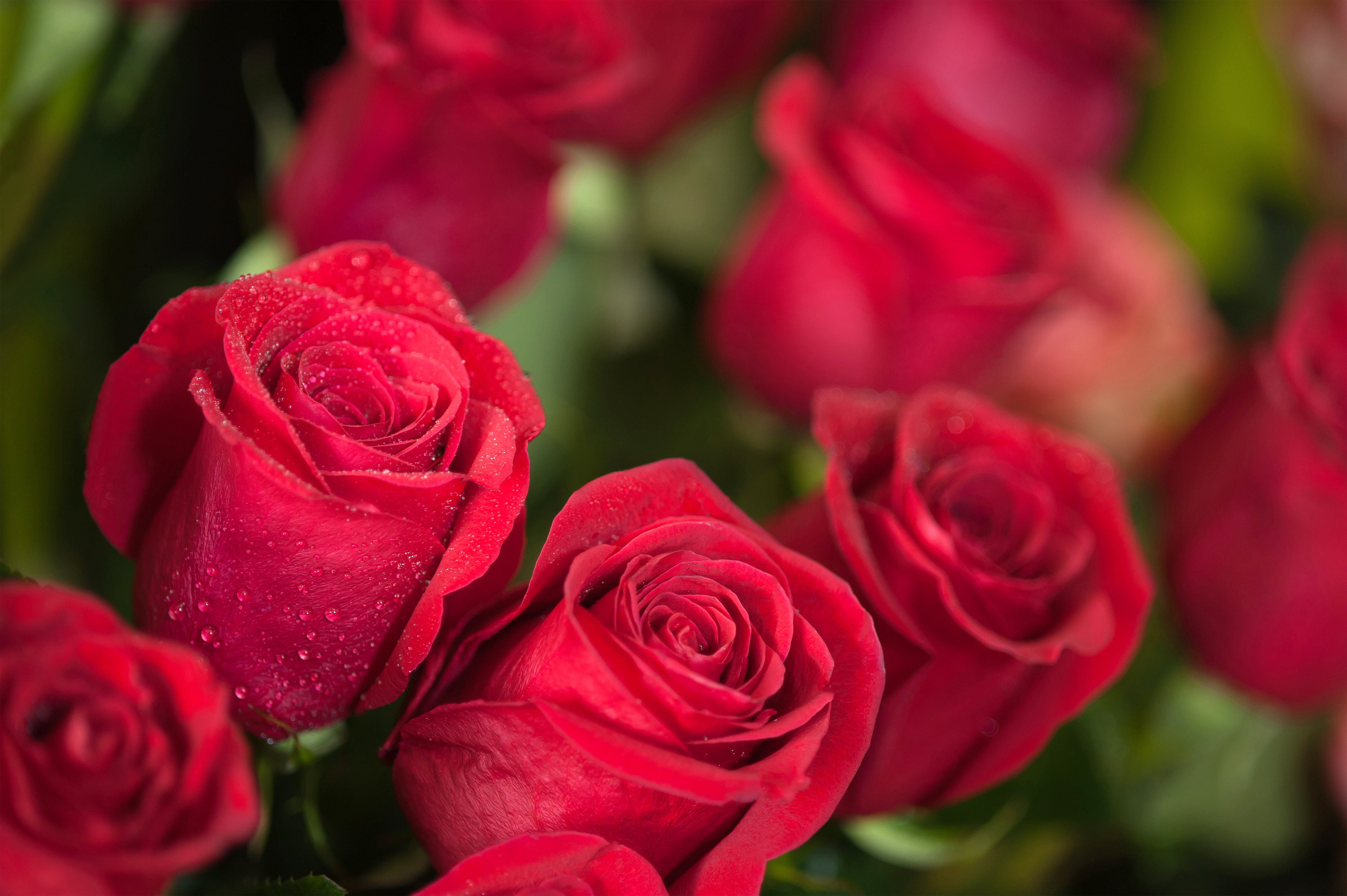 Fall Heart Leaves Background Wallpaper Beautiful Red Roses Background Gallery Yopriceville