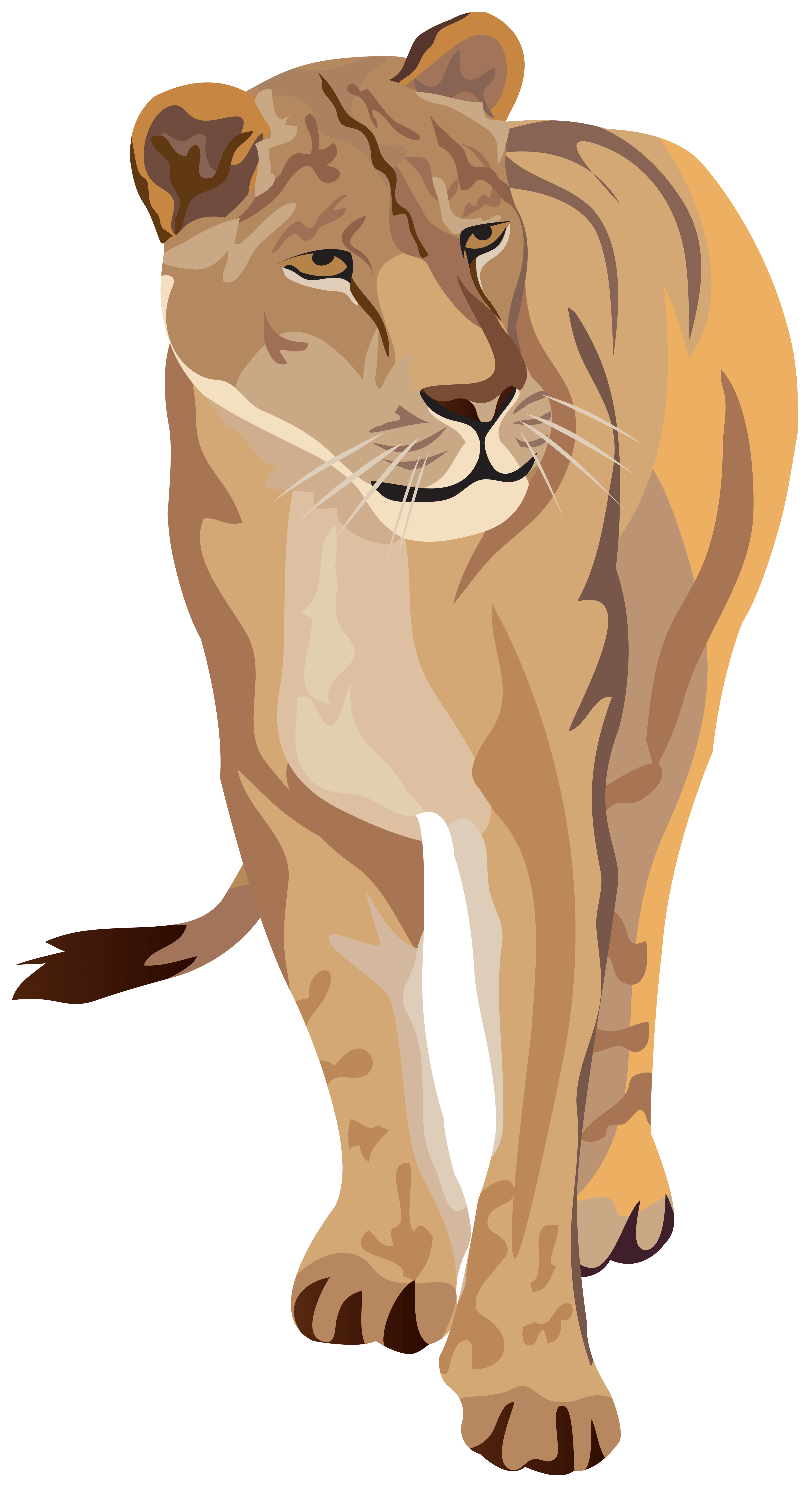hight resolution of lioness clipart image