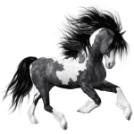 White Black Horse Png Clipart Picture Gallery Yopriceville High Quality Images And Transparent Png Free Clipart