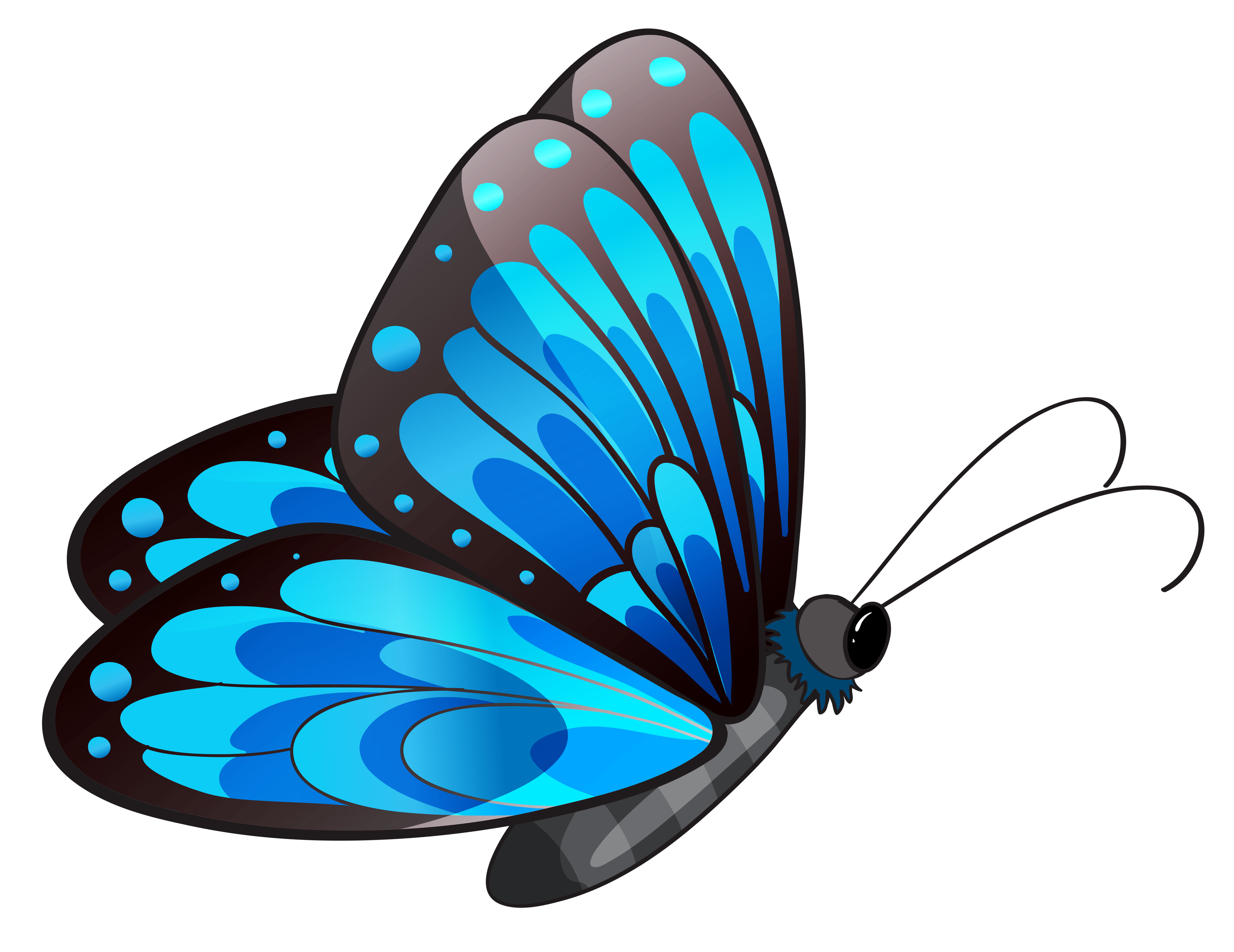 transparent blue butterfly png clipart [ 4155 x 3205 Pixel ]