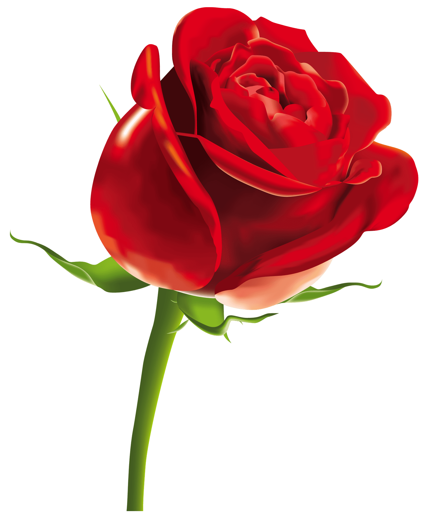 red rose png clipart