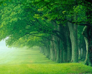 Beautiful Green Forest Background Gallery Yopriceville High Quality Images and Transparent PNG Free Clipart