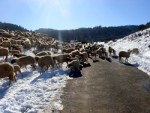 Rush hour outside Ifrane