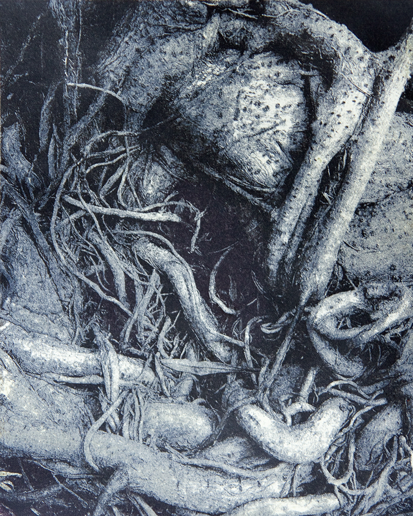 """""""Coiled Roots"""" © Colin D. Irwin. Approx. 10x8"""" (25.40x20.32 cm) handcrafted polychrome gum oil print on Stonehenge paper. Signed, single edition print, offered at $250."""